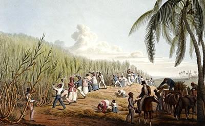 sugarcane-plantations.jpg